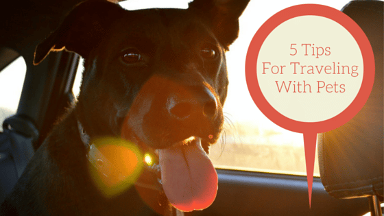 5 tips for traveling with pets